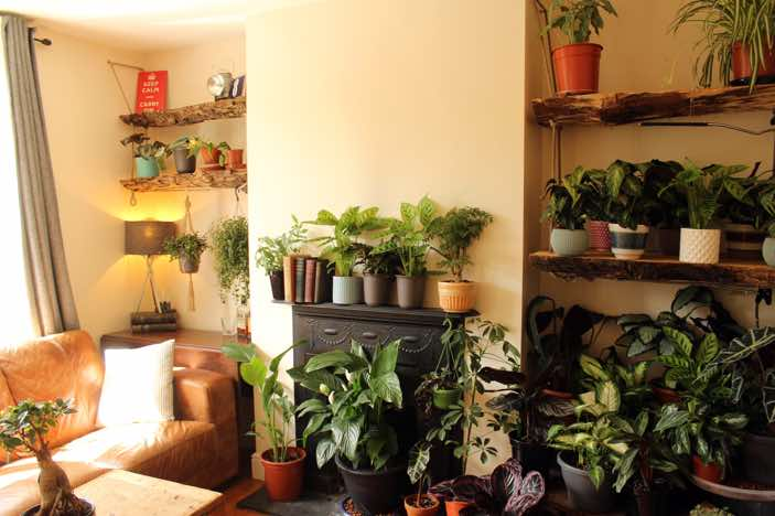 Oak shelving for a client in Hurstpierpoint, to display of her wonderful plant collection.